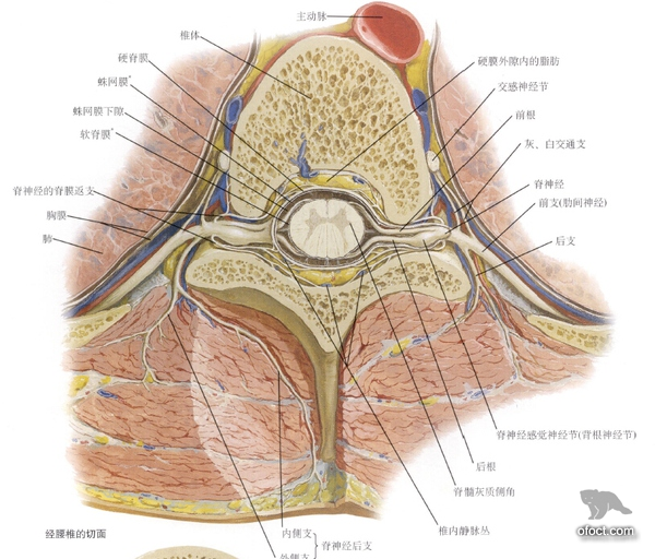 Something About Lumbar Disc Herniation Bear File Converter